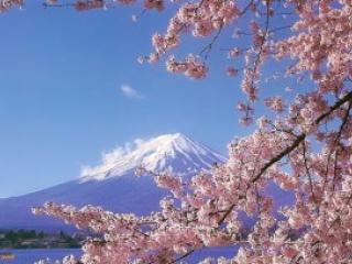 Что может удивить при посещении Японии